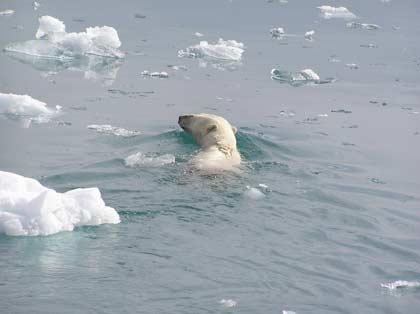 polarbear_7.jpg