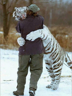 tigermanhug.jpg